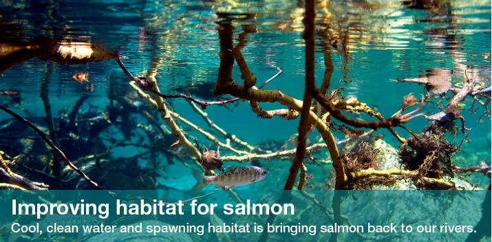 Improving habitat for salmon