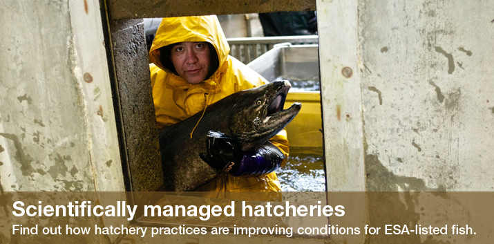 Scientifically managed hatcheries