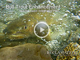 Bull Trout Enhancement, Yakima Basin Integrated Plan